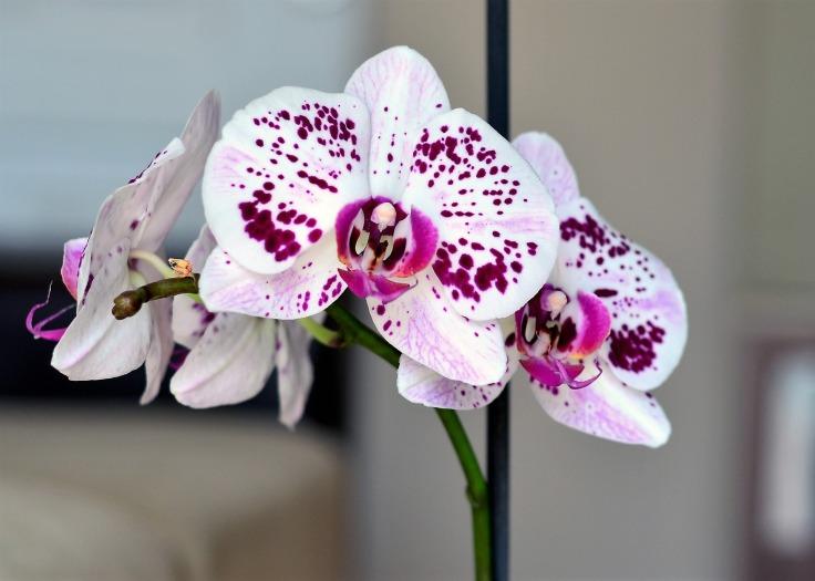 cultivar orquideas
