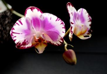 aprenda a cultivar orquídeas